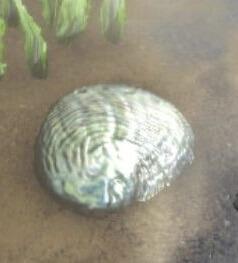 真珠のオブジェクト