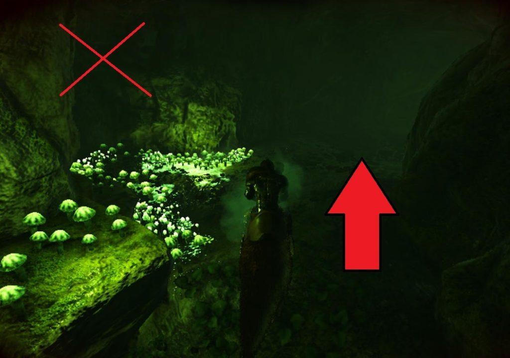 免疫の洞窟道順