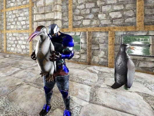 カイルクペンギンを拾う