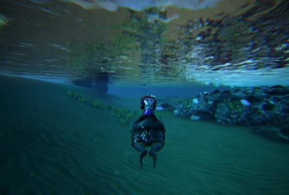 ベールゼブフォの泳ぎ