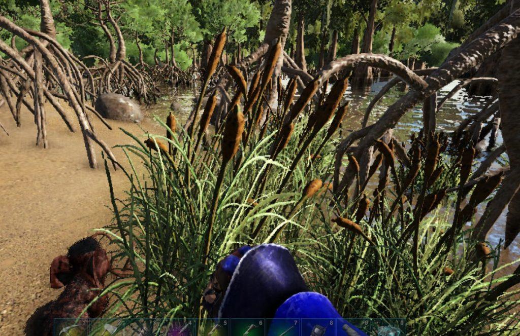 湿地帯の草からレアフラワー採取