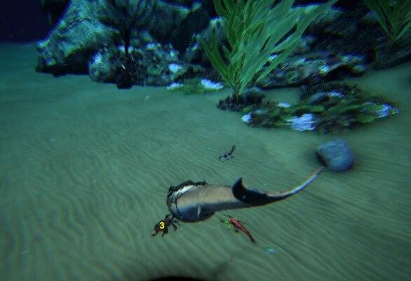 海サソリ狩り