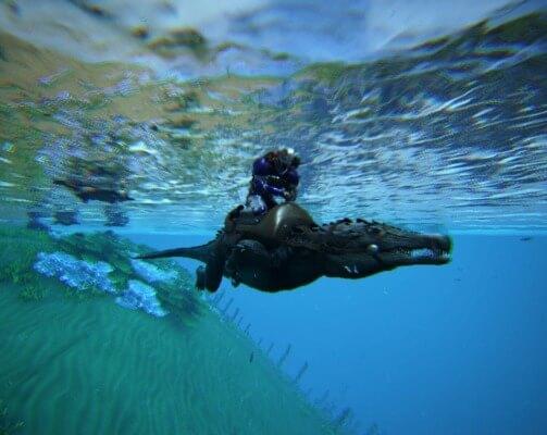 カプロスクスの泳ぎ