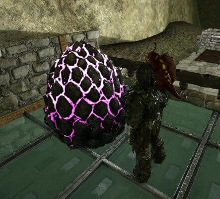 ロックドレイクの卵孵化