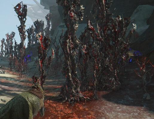 赤い樹液の伐採場所
